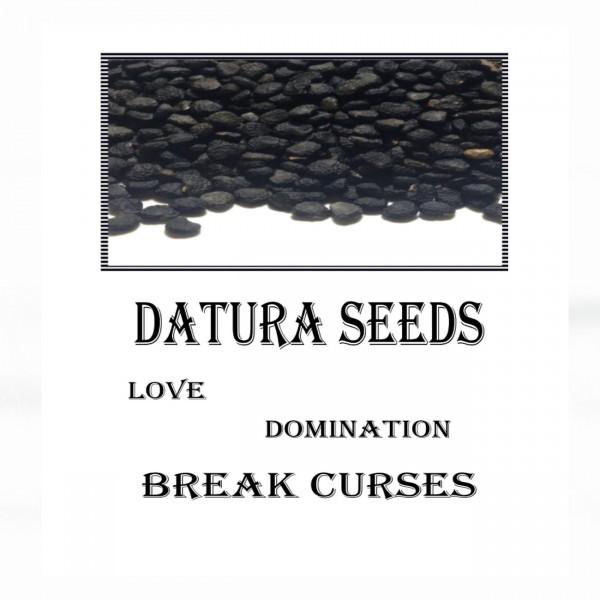 Datura Seeds - Τάτουλα